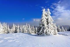 No gramado coberto com a neve que as árvores agradáveis estão estando derramou com os flocos de neve no dia de inverno gelado Imagens de Stock