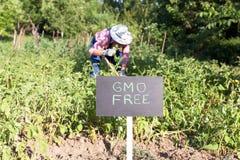No huerto de GMO foto de archivo