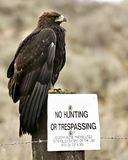 No Hunting – Golden Eagle Royalty Free Stock Photography