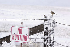 No Hunting Sign With Bird Stock Photography