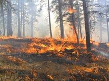 No incêndio Fotos de Stock