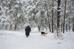 No inverno, a floresta coberto de neve ao longo do trajeto seguiu pelo pe Fotografia de Stock Royalty Free