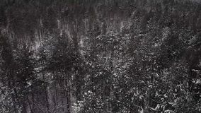 No inverno Forest Between Pines video estoque