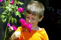 No jardim de rosas Fotografia de Stock Royalty Free