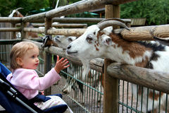 No jardim zoológico Foto de Stock Royalty Free