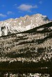 No jokes - real nature. Jasper national park, harsh mountain range, forest on the slope Stock Image