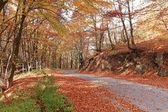 No lado da montanha de Balcãs dourada vermelha do cruzamento de estrada do outono, Bulgária Fotos de Stock Royalty Free