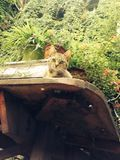 No Mans cat Stock Image