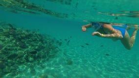 No mar, uma menina em nadadas mergulhando especiais de uma máscara, examina peixes, cercas, a beleza do mundo subaquático, na vídeos de arquivo