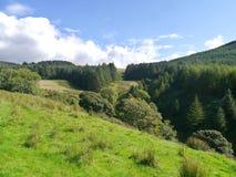No monte que olha ao vale carregado da flora pesada foto de stock