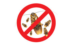 No More Group Cockroach icon ,Sign and dead of a cockroach. Isolated on a white background Stock Photo