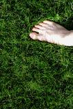 Nożny dotyk trawa Fotografia Royalty Free