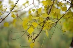 No outono Fotos de Stock