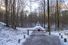 No parking sign on the next mark in the winter forest in January, Brussels, Belgium Stock Images