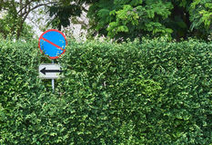No parking sign on the tree wall background Stock Photos