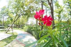 No parque Foto de Stock Royalty Free