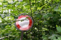 No pase la parada firman adentro el bosque demasiado grande para su edad por los árboles imagen de archivo libre de regalías