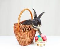 No preto da cesta o coelho alcança para fora a um vaso com ovos da páscoa Imagens de Stock Royalty Free