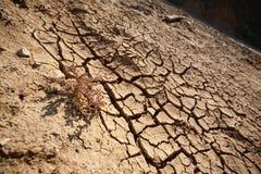 No rain. Dry cracky earth, clay and a flower bush stock photos