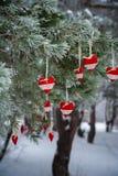 No ramo coberto de neve de árvores de Natal, as decorações do Natal penduram sob a forma das bolas transparentes, corações do fel Imagens de Stock