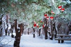 No ramo coberto de neve de árvores de Natal, as decorações do Natal penduram sob a forma das bolas transparentes, corações do fel Imagem de Stock Royalty Free