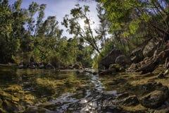 No rio Fotografia de Stock
