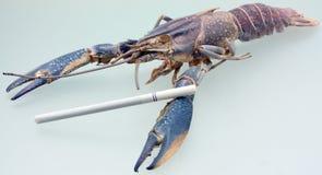 No smoking!. Crawfish and cigarette - lung cancer.(Metaphor royalty free stock image