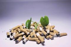 No Smoking; Cigarette and newborn green plant Royalty Free Stock Photo