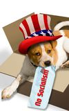 No Socialism today In America. No Socialism in America with puppy holding no Socialism note stock photo