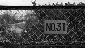 No31 staalomheining Stock Afbeeldingen
