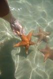 No toque las estrellas de mar fotografía de archivo