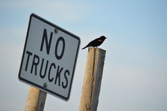 No Trucks Stock Photos