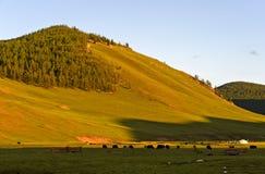 No vale de Orkhon Foto de Stock