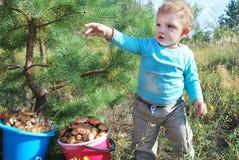 E há mais cogumelos! Imagem de Stock