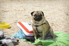 No verão há um cão que senta-se na praia Imagem de Stock Royalty Free