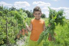 No verão o menino do jardim que guarda uma cenoura Foto de Stock