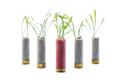 No war concept photo. Sprouts of grass grows out of gun cartridge. Shotgun. Red cartridge in middle. White isolated background royalty free stock image