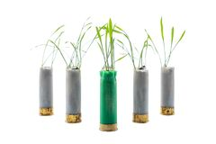 No war concept photo. Sprouts of grass grows out of gun cartridge. Shotgun. Green cartridge in middle. White isolated background royalty free stock photography