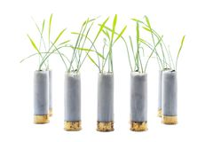 No war concept photo. Sprouts of grass grows out of gun cartridge shotgun. White isolated background stock photos