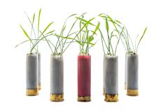 No war concept photo. Sprouts of grass grows out of gun cartridge shotgun. Red cartridge in middle. White isolated background. stock photos