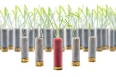 No war concept photo. Sprouts of grass grows out of gun cartridge shotgun. Red cartridge in middle. White isolated background. royalty free stock images