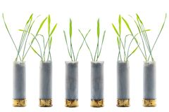 No war concept photo. Sprouts of grass grows out of gun cartridge shotgun. White isolated background royalty free stock photography