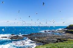 Nobbies in Phillip Island met een schoon en winderig weer en een zeer blauwe overzees royalty-vrije stock afbeelding