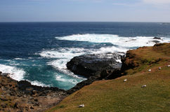 Nobbies and Seal Rocks. View of Philip island. Photo taken near Nobbies and Seal Rocks (Australia, Victoria Stock Photography