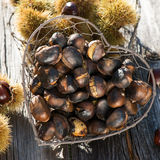 Noble chestnuts Royalty Free Stock Photo