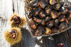 Noble chestnuts Stock Images