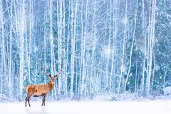 Noble deer against winter snowy forest. Artistic fairy Christmas. Winter seasonal image