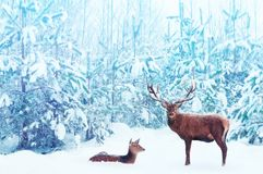 Noble deer male and female in a snowy winter blue forest. Artistic christmas fantasy image in blue and white color stock images