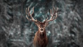 Noble deer male in winter snow forest. Artistic winter christmas landscape