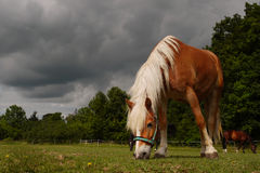 Horse  Farm Closeup Royalty Free Stock Image